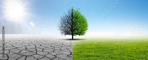 Drought and Green Nature Tableau sur Toile