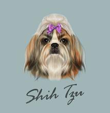 Shih Tzu Dog Animal Cute Face....