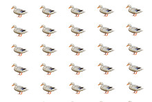 Isolated Duck Pattern On White Background