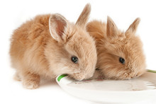 Two Little Red Rabbits Drink W...