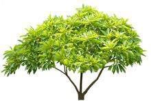 Beautiful Ornamental Tree From...