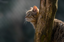 Wild Cat In The Green Season Leaf Forest