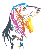 Colorful Decorative Portrait Of Saluki Dog Vector Illustration