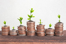 Financial Planning, Money Growth Concept. Coins With Young Plant On Table With Backdrop Cement Wall.