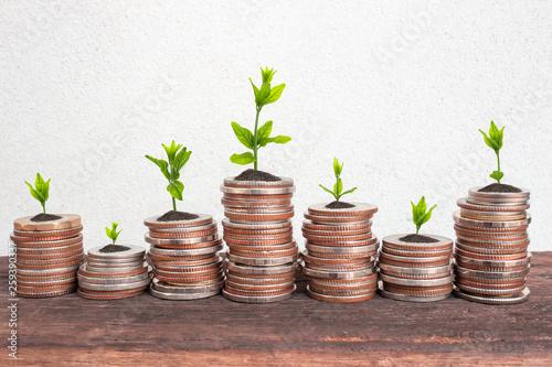 Fotografía  Financial planning, Money growth concept