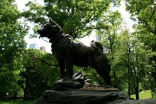 Balto Monument In New York Central Park. Spring. May 2016.