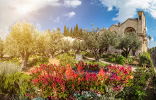Gethsemane Garden, Mount Of Olives, Jerusalem, Israel