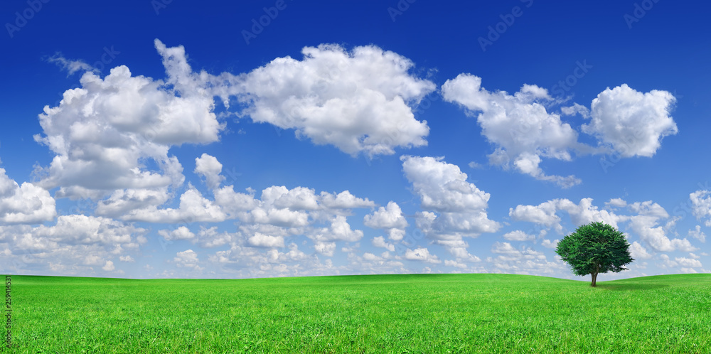 Fototapety, obrazy: Idyll, panoramic landscape, lonely tree among green fields
