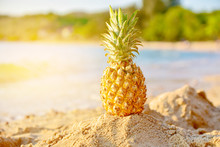 Pineapple On Beach Summer Background Holiday Travel Concept