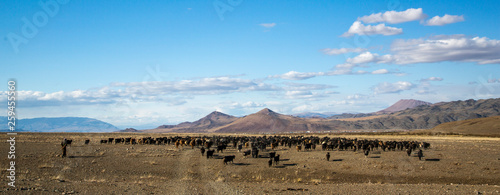Valokuvatapetti man herding his animals