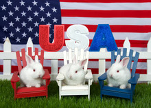 3 Adorable White Baby Albino Bunny Rabbits Sitting In Red, White And Blue Wooden Chairs On Green Grass Backyard, White Picket Fence USA Sparkling In Sunlight, American Flag In Background.
