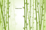 Fototapeta Sypialnia - Vector greeting card with bamboo on a light background.