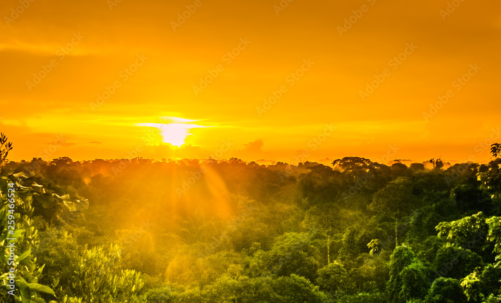 Fototapety, obrazy: sunset over the trees in the brazilian rainforest of Amazonas