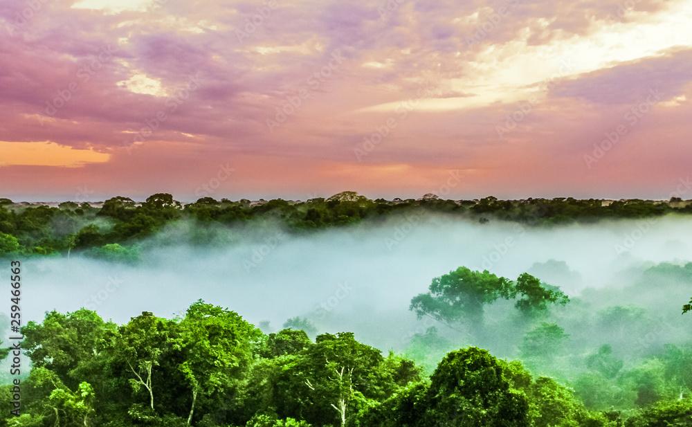 Fototapeta sunset over the trees in the brazilian rainforest of Amazonas