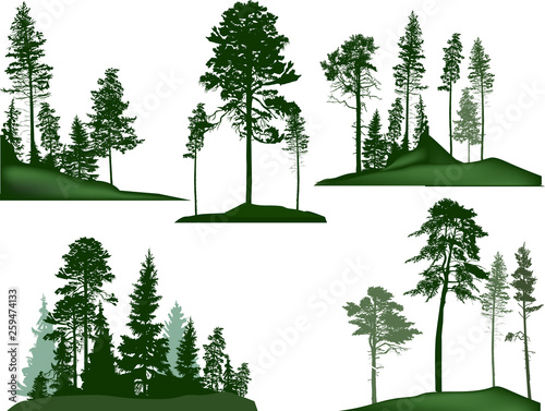 Fototapeta set of five green pine trees groups on white obraz