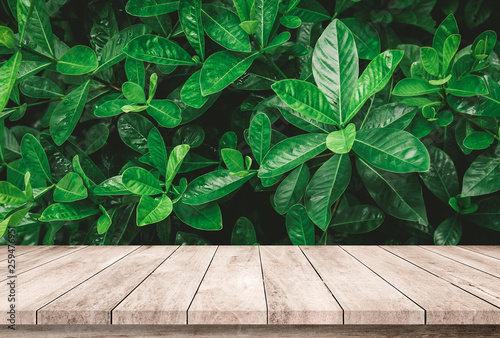 Pinturas sobre lienzo  Old wood plank with abstract natural green leaves background for product display