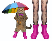 The Girl And Her Cat In A Bow Tie With A Color Umbrella Are Wearing Pink Rubber Boots. White Background. Isolated.