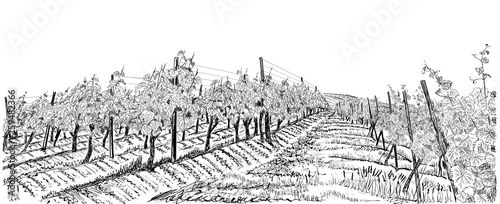Montage in der Fensternische Weiß Vineyard landscape hand drawn sketch vector illustration isolated on white