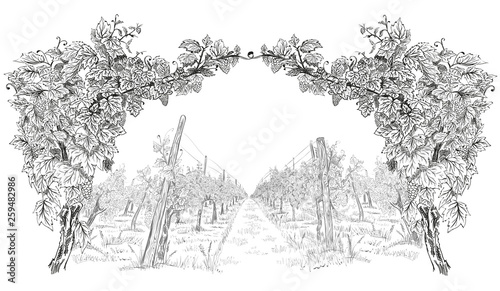Foto auf AluDibond Weiß Arc from of grapevine with landscape of vineyard. Hand drawn horizontal sketch vector background isolated on white