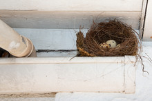 Nest Bird With Small Egg Under The Gutter Roof Home