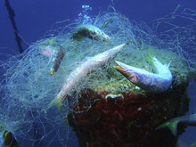 Ghost Nets Are Commercial Fishing Nets That Have Been Lost, Abandoned, Or Discarded At Sea In Tunku Abdul Rahman Park, Kota Kinabalu. Sabah, Malaysia, Borneo.