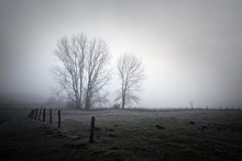 Lonely Foggy Winter Landscape,...