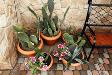 Big Cactus Plants In Pottery Pots And Flowers On Porch At Brick Wall At Front Of House. Succulents. Desert Plants