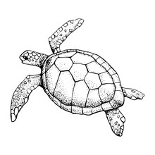Hand Drawn Sea Turtle Isolated On A White Background. Vector With Animal Underwater. Illustration For T-shirt Graphics, Fashion Print, Poster, Textiles