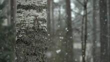 Slush Rains. Snowfall, Slow Mo...