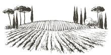 Vine Hills Landscape. Vector L...