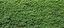Green Leaf Plant Wall Background