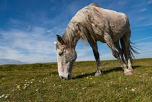 Horse Grazing In A Rural Irish...