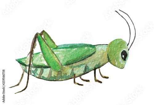 Fotografia green grasshopper on a white background