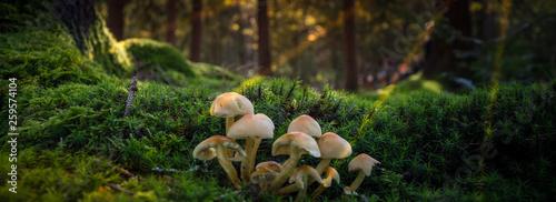 Forest Tablou Canvas