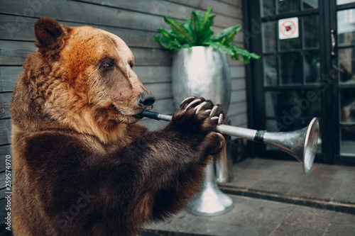 Bear plays trumpet - 259574970