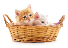 Two Red Kittens In A Basket.