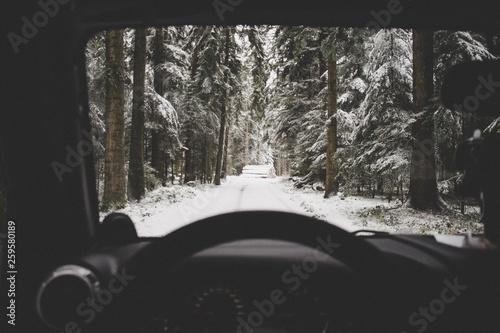 Fotomural snow forrest drive