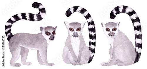 akwarela-recznie-malowany-lemur-tropikalny