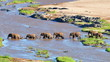 elephants crossing Olifant river,evening shot,Kruger national park