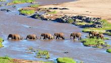 Elephants Crossing Olifant Riv...