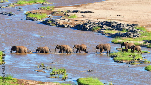 Foto auf Leinwand Elefant elephants crossing Olifant river,evening shot,Kruger national park