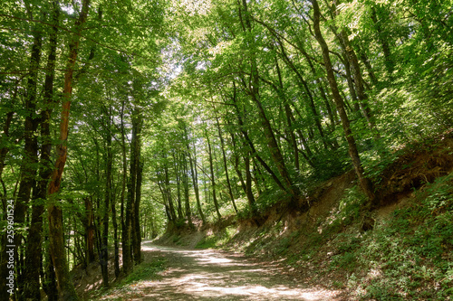 Photo Stands Road in forest Dirt road in dense green forest