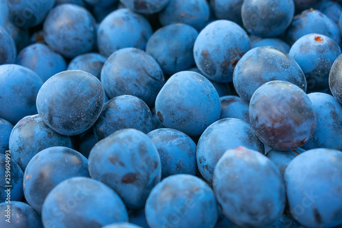 Photo  background made of blackthorn