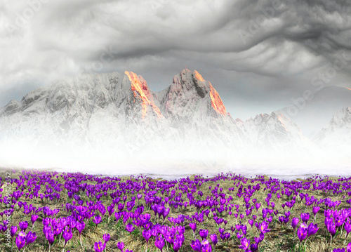 Garden Poster Alpine crocuses in the mountain fields