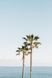 canvas print picture - Palm trees and the Pacific Ocean at Treasure Island Park, in Laguna Beach, Orange County, California