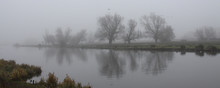 Trees In The Fog On The Rivers...
