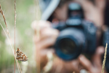 Close Up Of Nickerl's Fritillary Butterfly In The Grass In Nature With A Photographer In Background