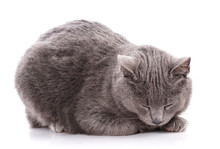 A Sleeping Gray Cat On A White Background.