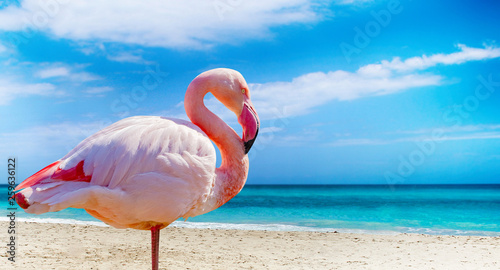 Foto op Aluminium Flamingo Close up photo of flamingo standing on the beach. There is clear sea and blue sky in the background. It is situated in Cuba, Caribbean. It is tropical natural background.