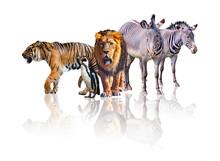 Group Of African Safari Animal...